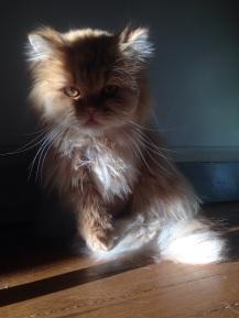 CHET's watching YOU !